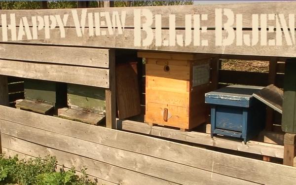 Samen opkomen voor het behoud van de bijen