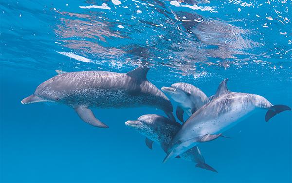 Spreekt u al Dolfijns?