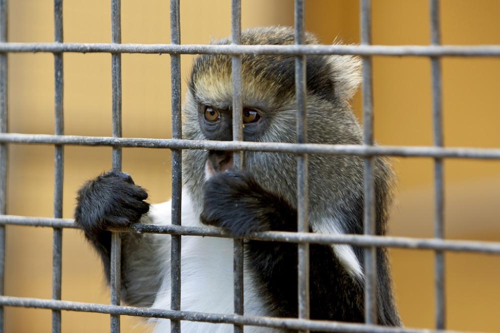 Dierenrechtenactivisme geeft dieren een stem