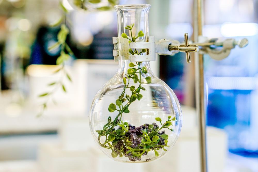 Verandert dit rapport de kijk op homeopathie?