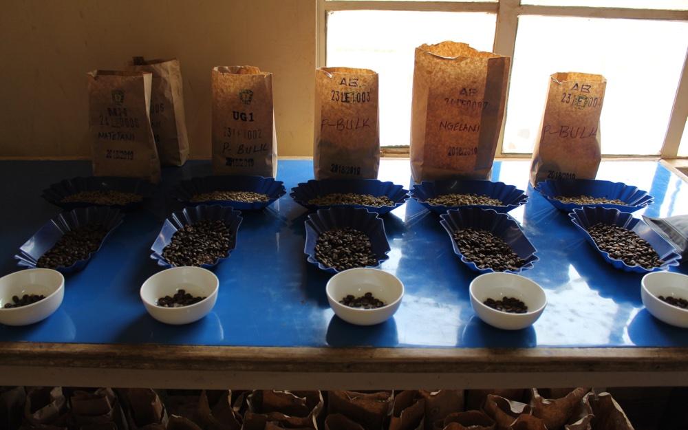 Op koffiereis in Kenia beantwoorden we twee lezersvragen