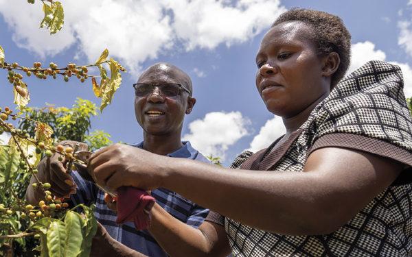 Op koffiereis door Kenia