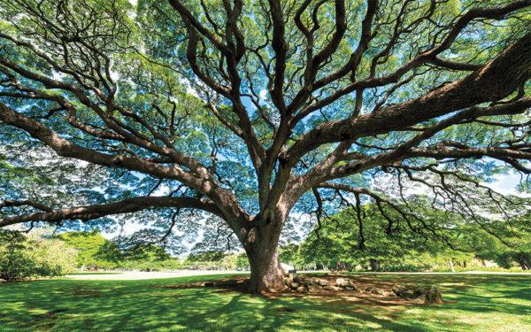Op verhaal komen bij bomen