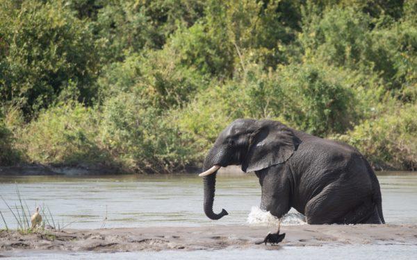 Bloeiend wildpark door unieke samenwerking