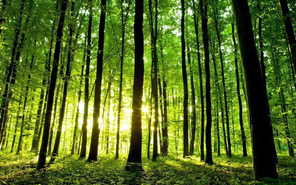 Twee grote organisaties planten samen 3.600 bomen