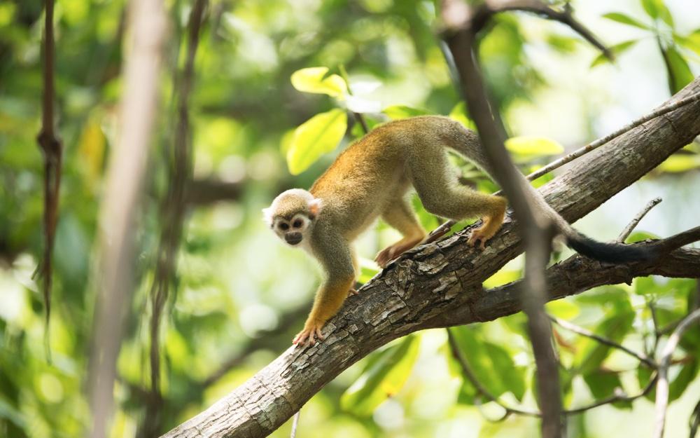 Natuur in Suriname beter beschermd