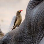 Neushoornbeschermers in actie