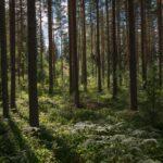 Isolatie om bossen te redden