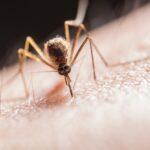 Microbe voorkomt malaria-infectie (Foto door Jimmy Chan via Pexels)