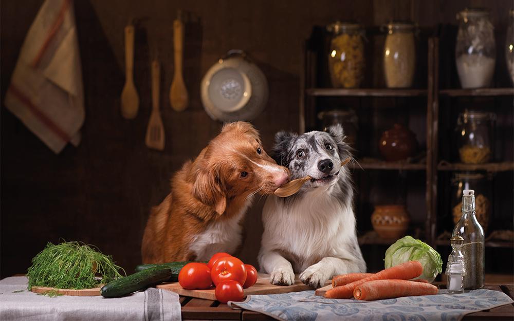 Uw hond een veganist?