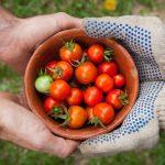 Nederlandse boer maakt eten weer gezond