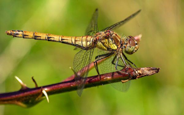 Aan huis gekluisterde wetenschappers ontdekken nieuwe insectensoorten