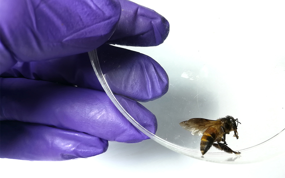 Bijengif tegen borstkanker