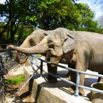 Cannabis tegen olifantenstress