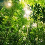 Corona helpt het regenwoud