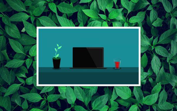 Everplant 1000×625