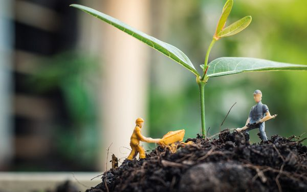 Miniature,People,Team,Works,To,Inspect,And,Plant,Trees,For